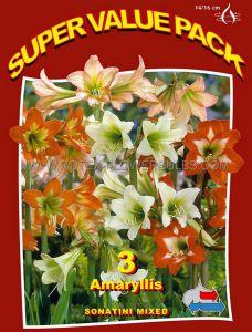 SUPER VALUE PKGS. HIPPEASTRUM (AMARYLLIS) HARDY SONATINI 'MIX' 14/16 CM. (20 PKGS.X 3)