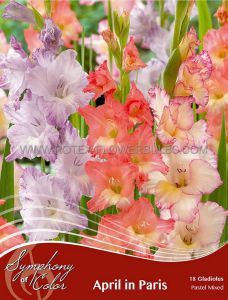 SYMPHONY OF COLORS PKGS. GLADIOLUS PASTEL MIX 'APRIL IN PARIS' 12/14 CM. (25 PKGS. X 18)