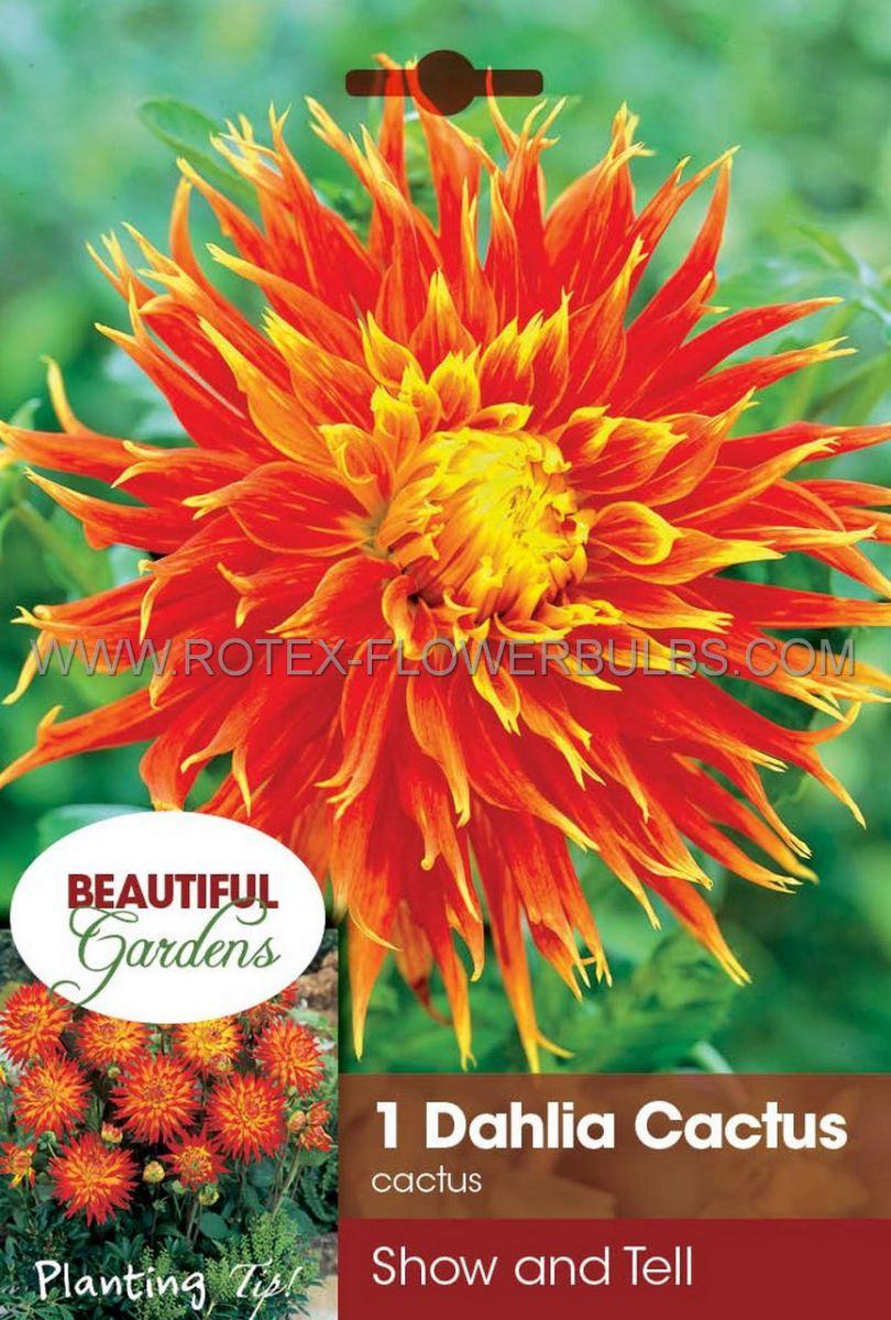 dahlia cactussemicactus show n tell i 10 pkgsx 1