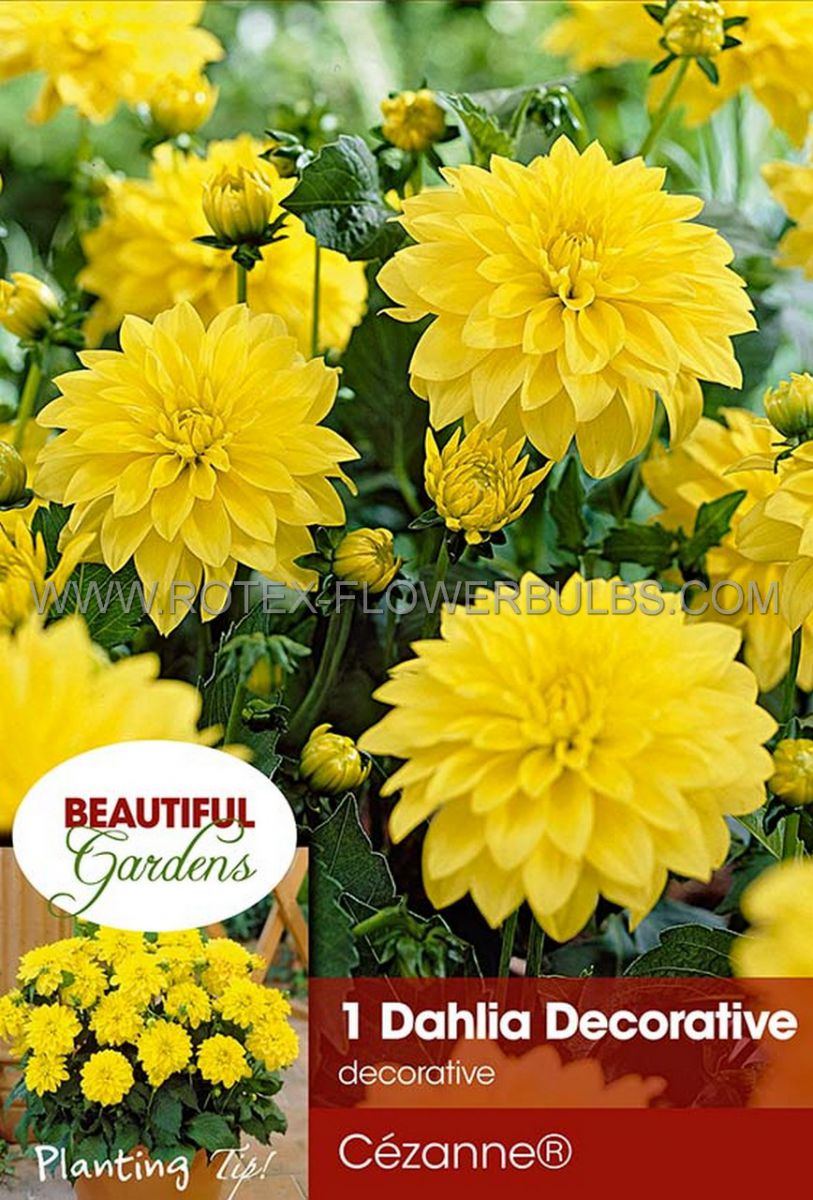 dahlia decorative borderpots gallery cezanne i 10 pkgsx 1