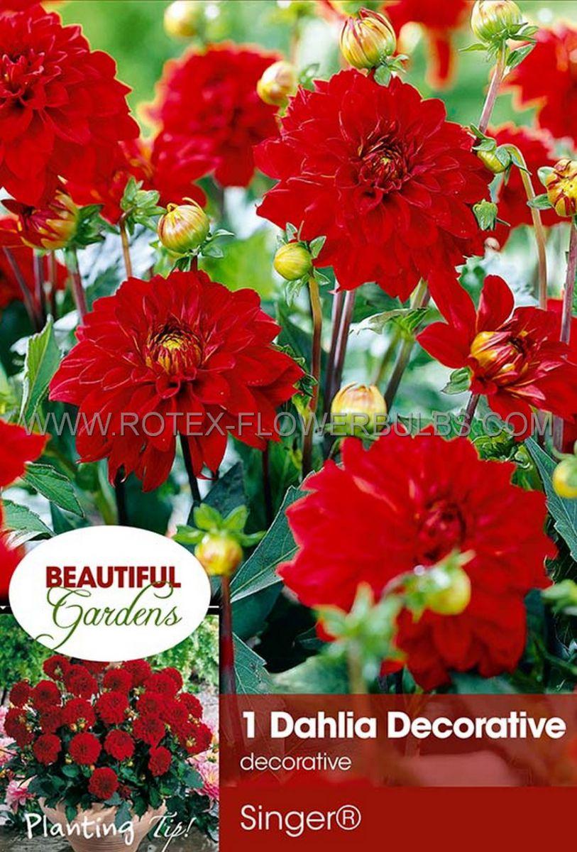 dahlia decorative borderpots gallery singer i 10 pkgsx 1