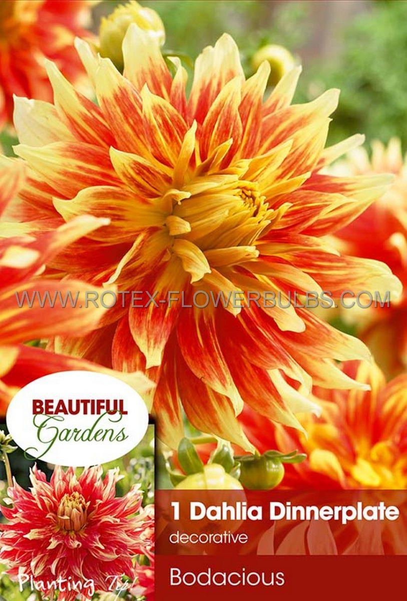 dahlia decorative dinnerplate bodacious i 10 pkgsx 1