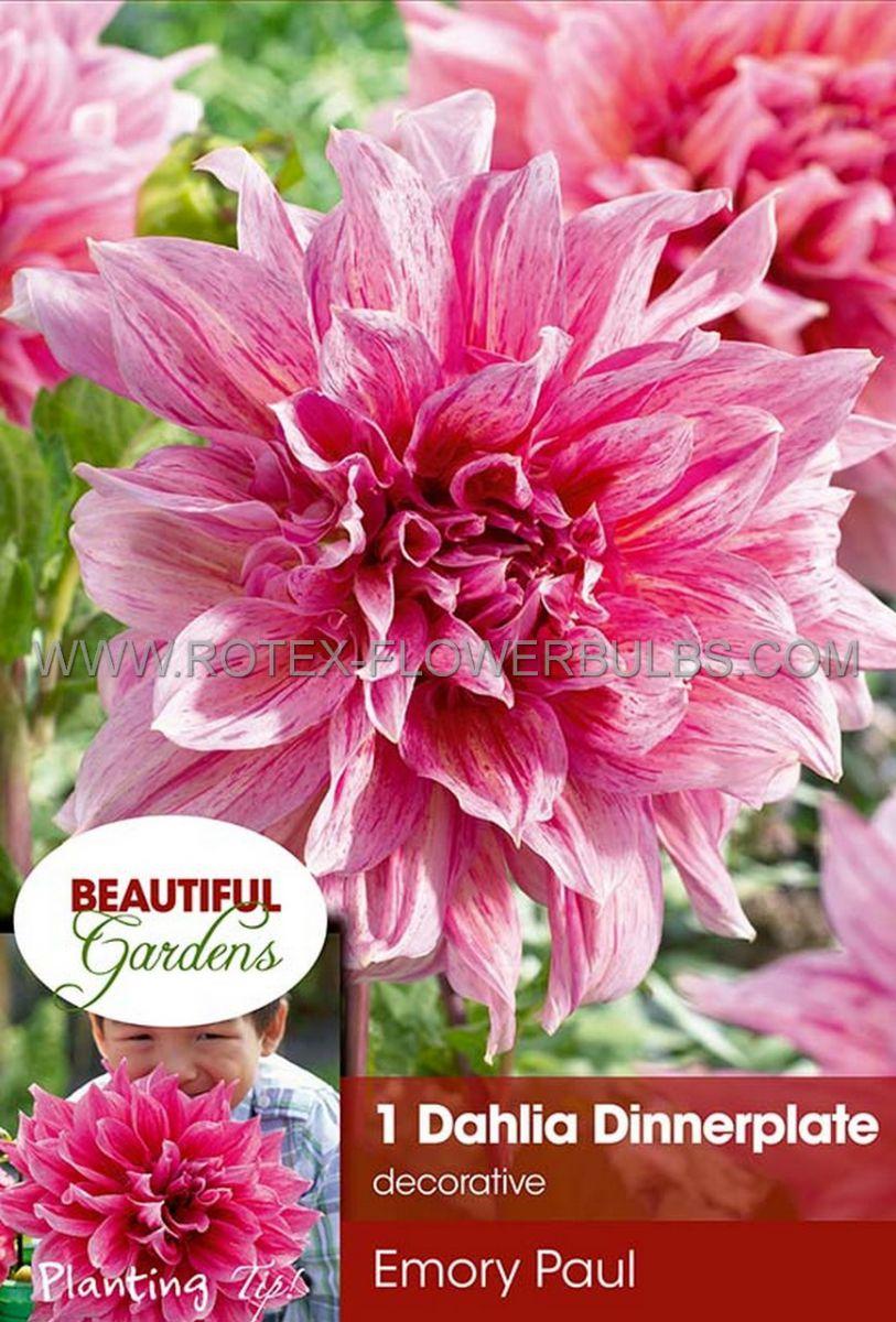 dahlia decorative dinnerplate emory paul i 10 pkgsx 1