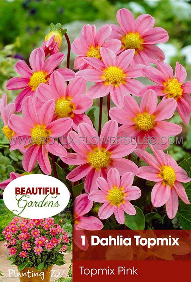 dahlia topmix borderpots pink i 10 pkgsx 1