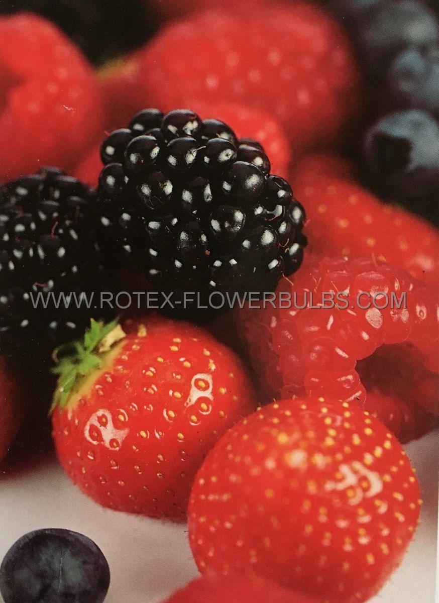 fruit berry assortment 25 pkgsx 1
