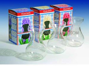 GIFTPARCELS/INDOOR CULTURE: GLASSES HYACINTH EMPTY CLEAR (12 PCS.)