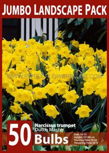 JUMBO LANDSCAPE PKGS. DAFFODIL (NARCISSUS) TRUMPET 'DUTCH MASTER' 10-12 (10 PKGS.X 50)