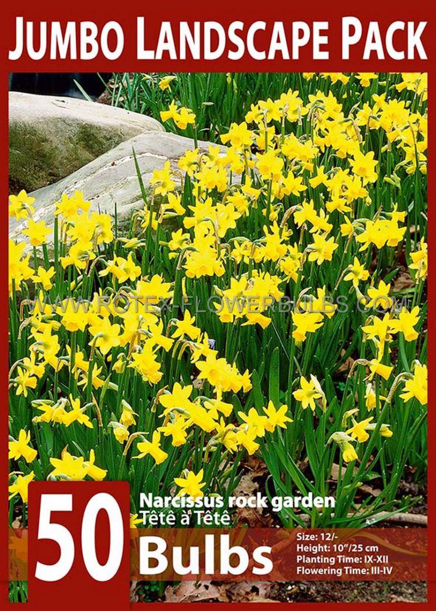 jumbo landscape pkgs narcissus botanical tete a tete 1012 10 pkgsx 50