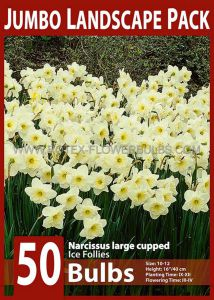 JUMBO LANDSCAPE PKGS. NARCISSUS LARGE CUPPED 'ICE FOLLIES' 10-12 (10 PKGS.X 50)