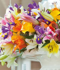LILIUM ORIENTAL ASSORTMENT (40 PKGS.X 2)