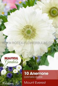 MISCELLANEOUS ANEMONE CORONARIA DOUBLE 'MOUNT EVEREST' 7/8 CM. (20 PKGS.X 10)
