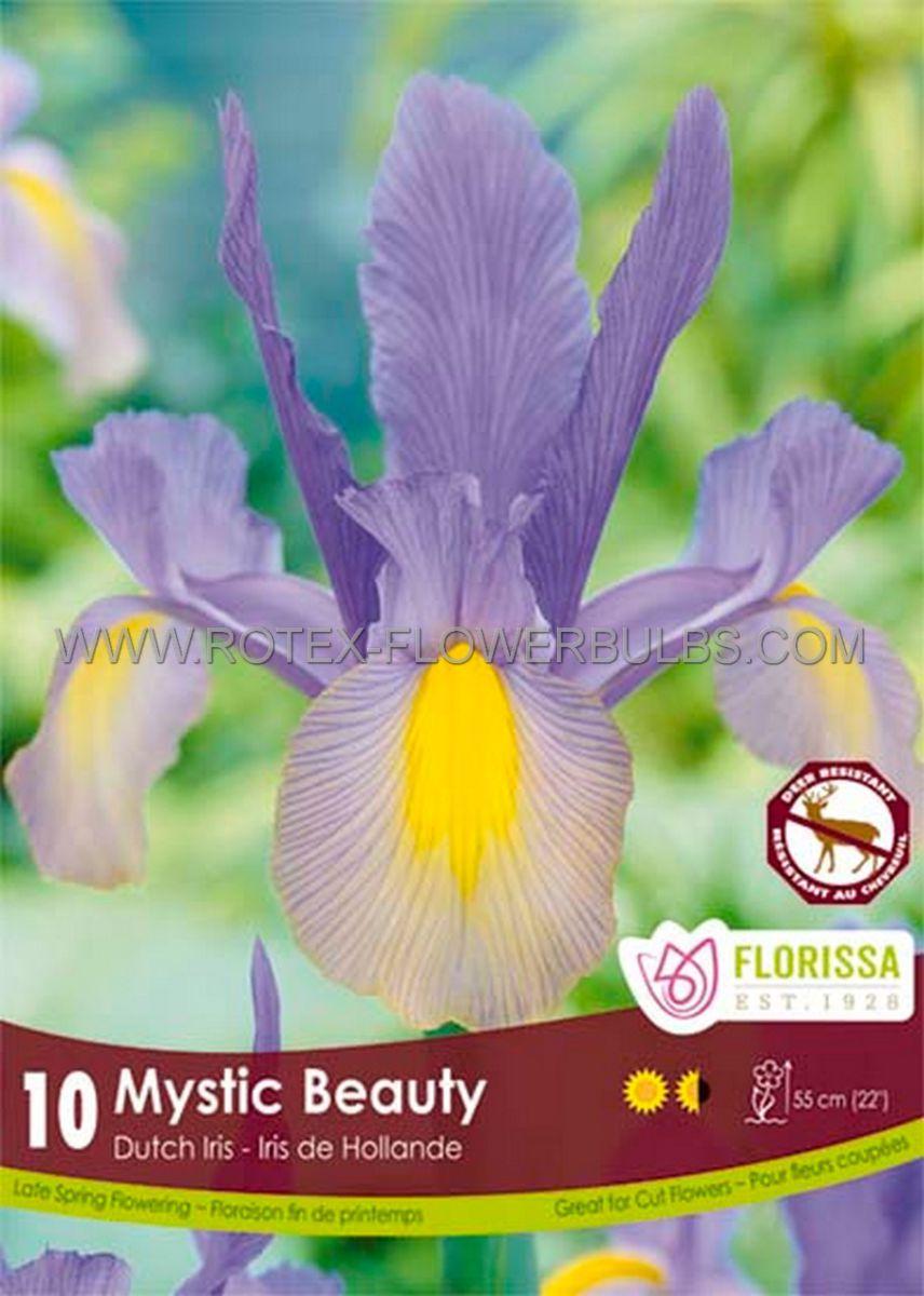 miscellaneous dutch iris mystic beauty 89 cm 15 pkgsx 15