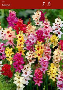 MISCELLANEOUS IXIA 'MIX' 5/+ CM. (100 P.BINBOX)