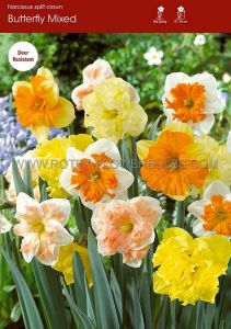 NARCISSUS BUTTERFLY 'MIX' 14-16 (50 P.BINBOX)