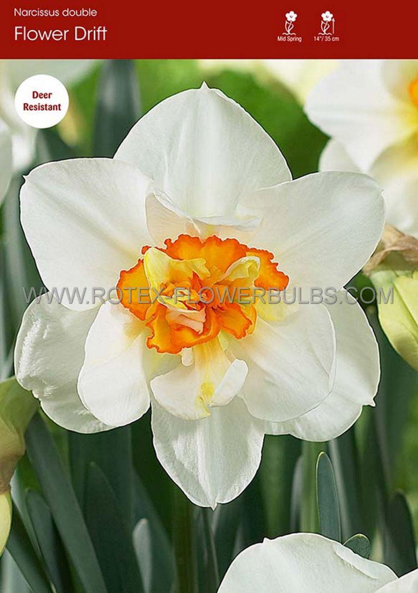 narcissus double flower drift 1416 50 pbinbox