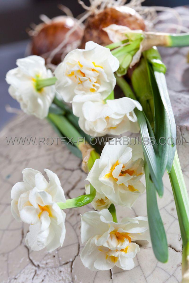 narcissus poetaz bridal crown 1416 50 pbinbox