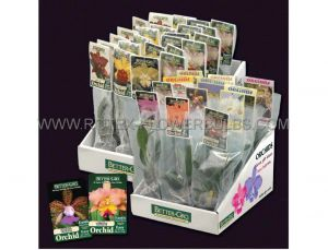 """ORCHID 4"""" IMPORTED (12 POTS P.TRAY)"""