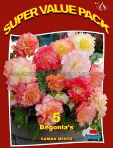 SUPER VALUE PKGS. BEGONIAS 'SAMBA MIX' 4/5 CM. (20 PKGS.X 5)