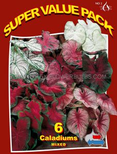 SUPER VALUE PKGS. CALADIUM 'MIX' NO.2 (20 PKGS.X 6)