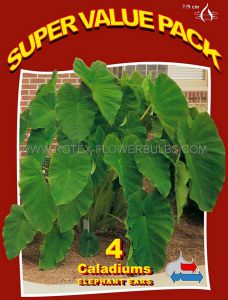 "SUPER VALUE PKGS. COLOCASIA ESCULENTA (ELEPHANT EAR) 7""-9"" (20 PKGS.X 4)"