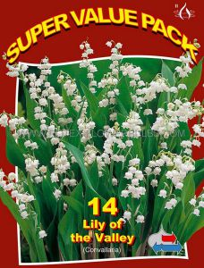 SUPER VALUE PKGS. CONVALLARIA (LILY OF THE VALLEY) II (20 PKGS.X 14)
