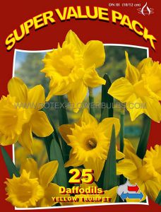 SUPER VALUE PKGS. DAFFODIL (NARCISSUS) TRUMPET 'YELLOW' 12-14 (10 PKGS.X 25)