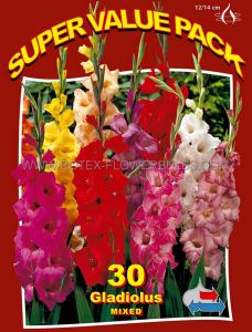 SUPER VALUE PKGS. GLADIOLUS 'MIX' 12/14 CM. (15 PKGS.X 30)