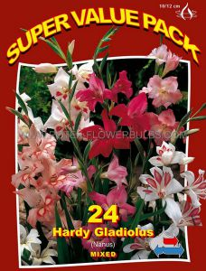 SUPER VALUE PKGS. GLADIOLUS NANUS 'HARDY MIX' 8/9 CM. (20 PKGS.X 24)