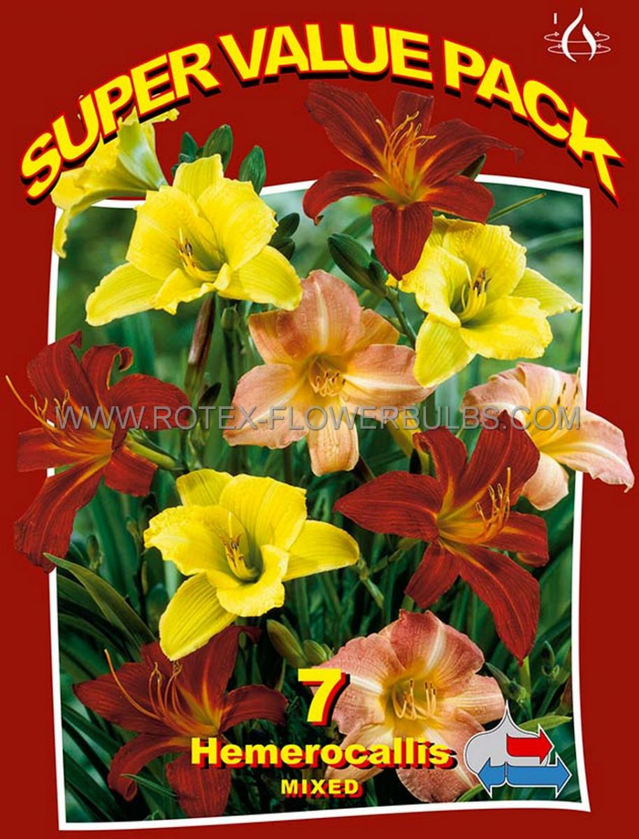 super value pkgs hemerocallis daylily mix ii 20 pkgsx 7