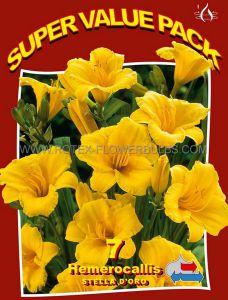 SUPER VALUE PKGS. HEMEROCALLIS (DAYLILY) 'STELLA D'ORO' II (20 PKGS.X 7)