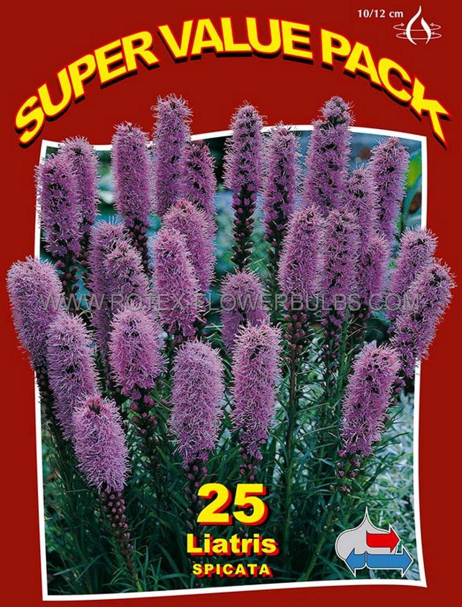 super value pkgs liatris gayfeather spicata blue 1012 cm 20 pkgsx 25