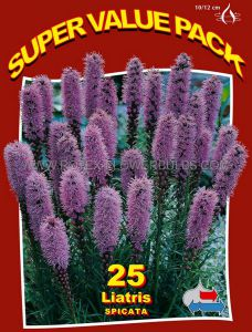 SUPER VALUE PKGS. LIATRIS (GAYFEATHER) SPICATA 'BLUE' 10/12 CM. (20 PKGS.X 25)