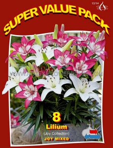SUPER VALUE PKGS. LILIUM 'JOY' COLLECTION 12/14 CM. (20 PKGS.X 8)