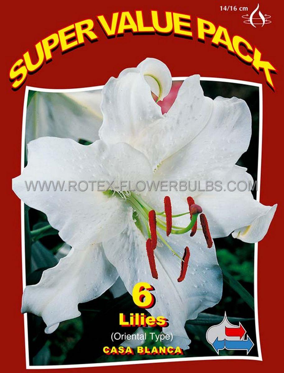 super value pkgs lilium oriental casa blanca 1416 cm 20 pkgsx 6