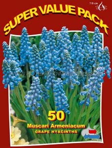 SUPER VALUE PKGS. MISCELLANEOUS MUSCARI ARMENIACUM 7/8 CM. (20 PKGS.X 50)