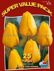 SUPER VALUE PKGS. TULIPA DARWIN HYBRID 'GOLDEN APELDOORN' 12/+ CM. (20 PKGS.X 25)