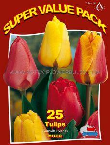 SUPER VALUE PKGS. TULIPA DARWIN HYBRID 'MIX' 12/+ CM. (20 PKGS.X 25)