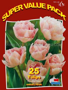 SUPER VALUE PKGS. TULIPA DOUBLE LATE 'ANGELIQUE' 12/+ CM. (20 PKGS.X 25)