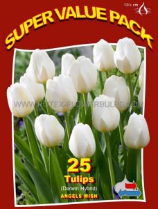 SUPER VALUE PKGS. TULIPA SINGLE LATE 'ANGEL'S WISH' 12/+ CM. (20 PKGS.X 25)
