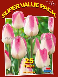 SUPER VALUE PKGS. TULIPA TRIUMPH 'INNUENDO' 12/+ CM. (20 PKGS.X 25)
