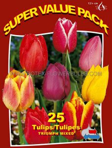 SUPER VALUE PKGS. TULIPA TRIUMPH 'MIX' 12/+ CM. (20 PKGS.X 25)