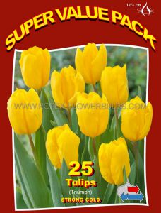 SUPER VALUE PKGS. TULIPA TRIUMPH 'STRONG GOLD' 12/+ CM. (20 PKGS.X 25)