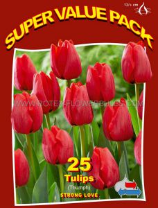 SUPER VALUE PKGS. TULIPA TRIUMPH 'STRONG LOVE' 12/+ CM. (20 PKGS.X 25)
