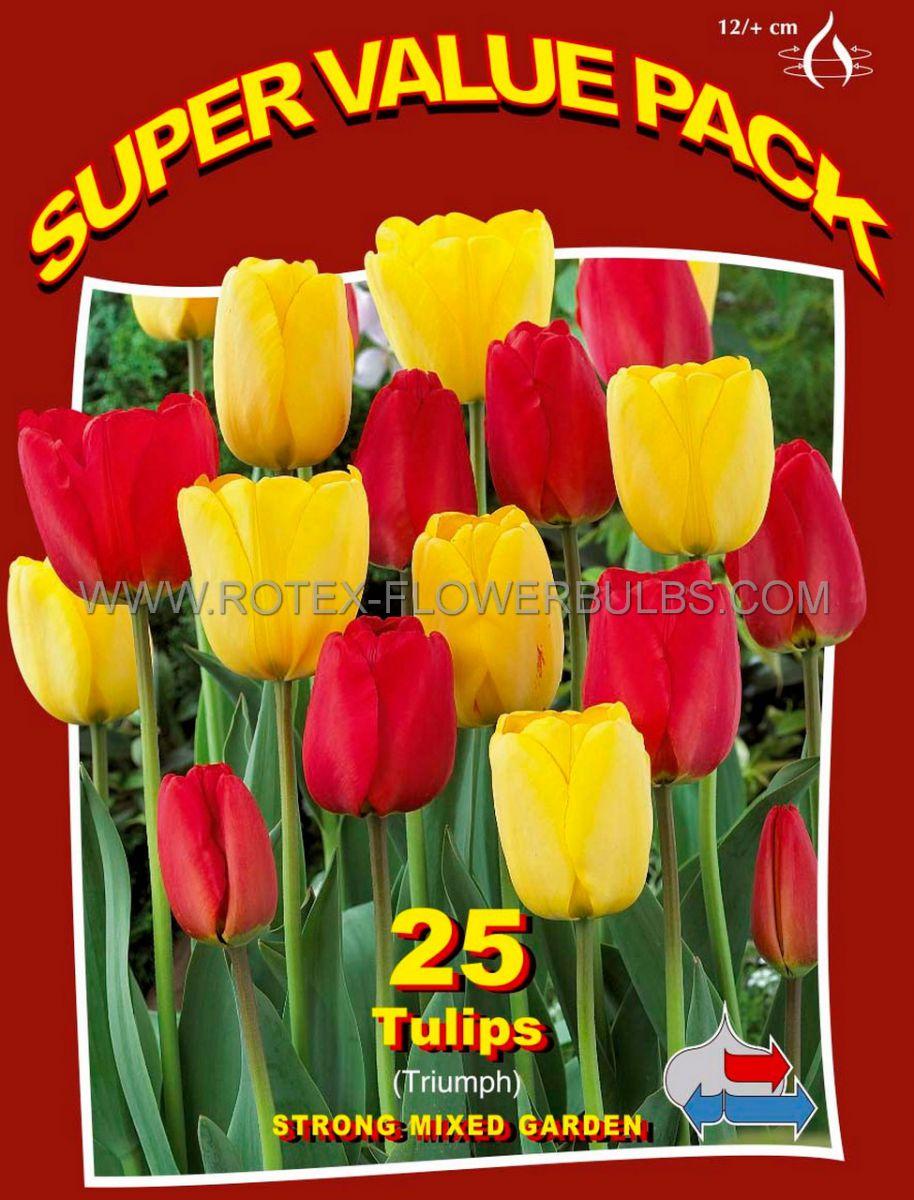 super value pkgs tulipa triumph strong mixed garden 12 cm 20 pkgsx 25