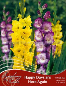 SYMPHONY OF COLORS PKGS. GLADIOLUS MIX 'HAPPY DAYS ARE HERE AGAIN' 12/14 CM. (25 PKGS. X 18)