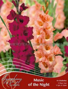 SYMPHONY OF COLORS PKGS. GLADIOLUS MIX 'MUSIC OF THE NIGHT' 12/14 CM. (25 PKGS. X 18)