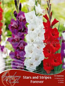 SYMPHONY OF COLORS PKGS. GLADIOLUS MIX 'STARS AND STRIPES FOREVER' 12/14 CM. (25 PKGS. X 18)