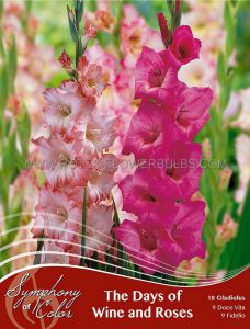 SYMPHONY OF COLORS PKGS. GLADIOLUS MIX 'THE DAYS OF WINE AND ROSES' 12/14 CM. (25 PKGS. X 18)