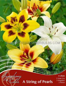 SYMPHONY OF COLORS PKGS. LILIUM MIX 'A STRING OF PEARLS' 12/14 CM. (25 PKGS. X 6)