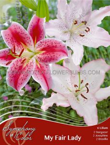 SYMPHONY OF COLORS PKGS. LILIUM MIX 'MY FAIR LADY' 12/14 CM. (25 PKGS. X 6)